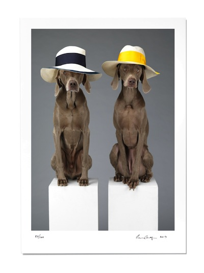 william wegman print   hat dogs   out now   new art editions