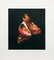 Mat Collishaw, Insecticide Photogravure, 2009.