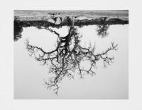 Rodney Graham, Oak Tree, Red Bluff, #8, 1993, 2005.