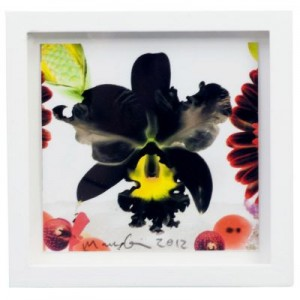 Marc Quinn, Small Square Edition i, 2012
