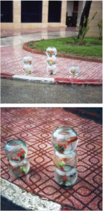 Yto Barrada - Aquariums for Sale on a Rainy Day, Tangier, 2001.