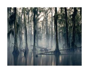 Nadav Kandar, Spanish Moss, Louisiana, USA, 1997-2013.