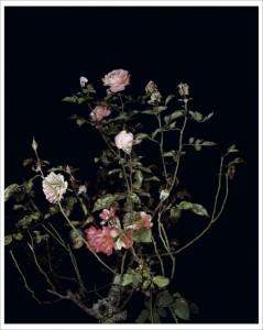 Sarah Jones, The Rose Gardens (Display: II) (III), 2013.