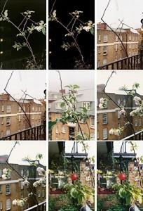 Wolfgang Tillmans, Process (apple tree) 2012.