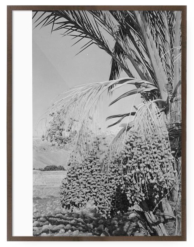 Haris Epaminonda, Tree with Dates, 2015