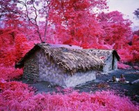 Richard Mosse, Come Out (1966) XXXXV, 2015