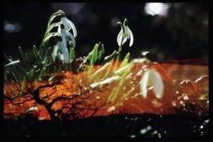 Peter Fischli, Blumen, 1998/2015