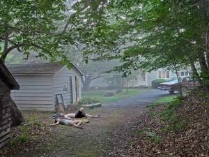 Gregory Crewdson, The Backyard, 2013-2016