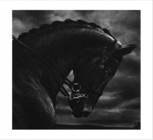 Robert Longo - Bucephalus - 2017