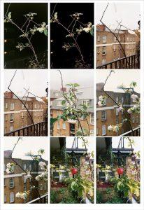 Wolfgang Tillmans - Process (Apple Tree) - 2012
