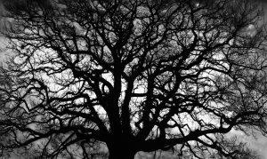 Robert Longo - Untitled (Tree) - 2018