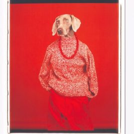 William Wegman - Casual