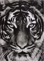 Robert Longo - Tiger - 2011