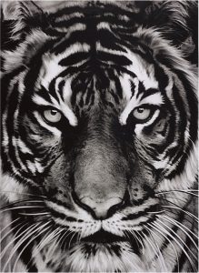 Robert Longo - Tiger - 2011