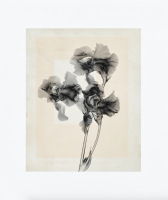 Thomas Ruff - flower.s_10 - 2020