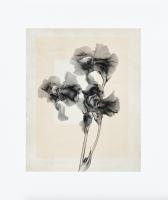 Thomas Ruff - flower.s_10 - 2020