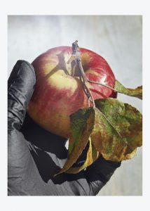 Roe Ethridge -Apple and Black Glove (From the seriesFugitive Sunset,forAperture) -2020