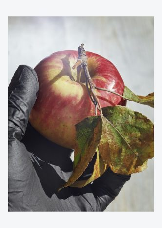 Roe Ethridge - Apple and Black Glove (From the series Fugitive Sunset, for Aperture) - 2020
