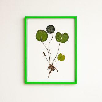 Olafur Eliasson - Herbarium - 2021